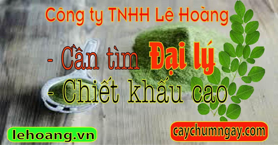 cay_chum_ngay_cchua_benh_gi