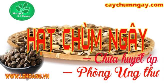 Hạt Chùm ngây Công ty Lê Hoàng