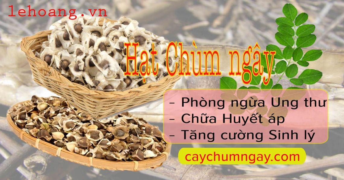 hat_chum_ngay
