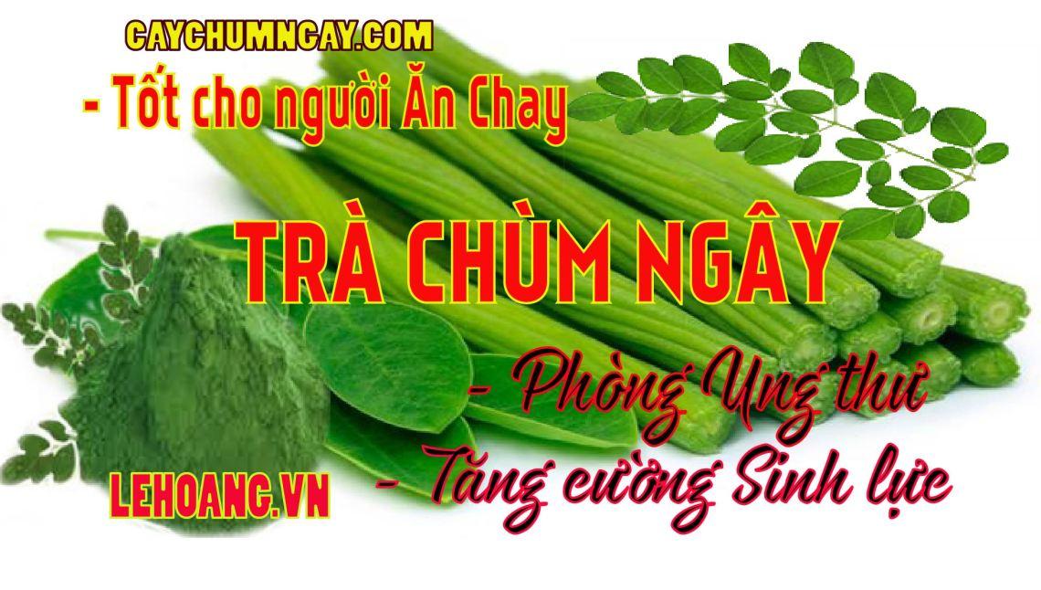 tac_dung_tra_chum_ngay