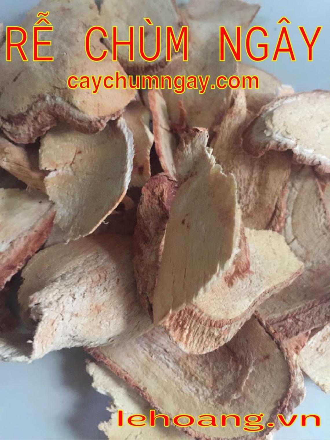 Bán Rễ Cây Chùm ngây (Moringa Roots) phòng trị Ung thư hiệu quả